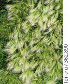 Купить «Текстура», фото № 362890, снято 20 июля 2008 г. (c) Марат Кабиров / Фотобанк Лори