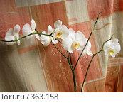 Купить «Орхидея», фото № 363158, снято 10 июля 2008 г. (c) Марат Кабиров / Фотобанк Лори