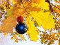 Новогодний шарик среди осенних листьев, фото № 363758, снято 17 октября 2006 г. (c) Анатолий Заводсков / Фотобанк Лори