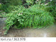 Купить «Пейзаж - на реке в предгорной зоне Кавказских гор», фото № 363978, снято 20 июля 2008 г. (c) Федор Королевский / Фотобанк Лори