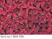 Купить «Фон из листьев», фото № 364106, снято 20 июля 2008 г. (c) Игорь Соколов / Фотобанк Лори