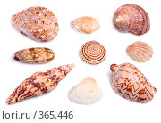 Купить «Морские раковины», фото № 365446, снято 25 июня 2008 г. (c) Pshenichka / Фотобанк Лори