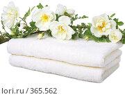 Купить «Банные полотенца», фото № 365562, снято 16 мая 2008 г. (c) Pshenichka / Фотобанк Лори