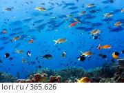 Купить «Подводный пейзаж», фото № 365626, снято 8 мая 2008 г. (c) Ольга Хорошунова / Фотобанк Лори
