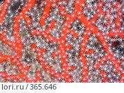 Купить «Коралловая текстура», фото № 365646, снято 8 мая 2008 г. (c) Ольга Хорошунова / Фотобанк Лори