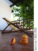 Купить «Оранжевое лето», фото № 365950, снято 13 июля 2008 г. (c) Галина Бурцева / Фотобанк Лори