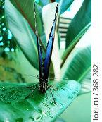 Купить «Бабочка в фас, сидящая на растении», фото № 368282, снято 25 июня 2008 г. (c) Софья Ханджи / Фотобанк Лори