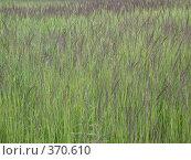 Купить «Трава. Фон», фото № 370610, снято 30 июня 2007 г. (c) sav / Фотобанк Лори