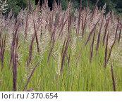 Купить «Трава. Фон», фото № 370654, снято 13 июля 2007 г. (c) sav / Фотобанк Лори