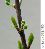 Купить «Весна», фото № 372186, снято 1 мая 2008 г. (c) Андрей Некрасов / Фотобанк Лори