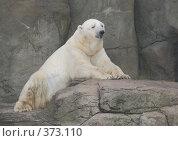 Купить «Белый медведь в московском зоопарке», фото № 373110, снято 26 июля 2008 г. (c) Екатерина Овсянникова / Фотобанк Лори