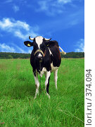 Корова на лугу. Стоковое фото, фотограф Aneta Vaitkiene / Фотобанк Лори