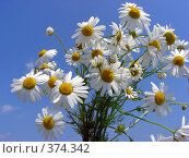 Купить «Букет белых полевых ромашек», эксклюзивное фото № 374342, снято 13 июля 2008 г. (c) lana1501 / Фотобанк Лори
