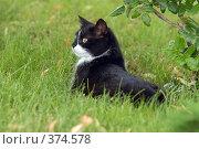 Купить «Черно-белая кошка на зеленой траве», фото № 374578, снято 27 июля 2008 г. (c) Виктор Филиппович Погонцев / Фотобанк Лори
