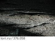 Купить «Свет на тропе», фото № 376058, снято 28 июля 2008 г. (c) uioio / Фотобанк Лори