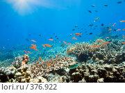 Купить «Подводный мир», фото № 376922, снято 19 апреля 2019 г. (c) Ольга Хорошунова / Фотобанк Лори