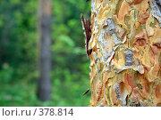 Купить «Кора дерева», фото № 378814, снято 1 мая 2008 г. (c) Дмитрий Лагно / Фотобанк Лори