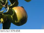 Купить «Яблоко на фоне неба», фото № 379658, снято 21 июля 2007 г. (c) Андрей Некрасов / Фотобанк Лори