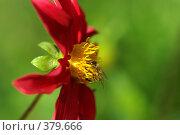 Купить «Пчела на красном цветке», фото № 379666, снято 19 августа 2007 г. (c) Андрей Некрасов / Фотобанк Лори