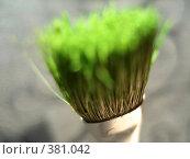 Купить «Зеленая кисточка крупным планом, вид сверху», фото № 381042, снято 31 июля 2008 г. (c) Софья Ханджи / Фотобанк Лори