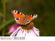 Купить «Бабочка на цветке», фото № 383830, снято 25 июля 2008 г. (c) Tyurina Ekaterina / Фотобанк Лори