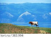 Купить «Корова на фоне гор и озера», фото № 383994, снято 16 сентября 2019 г. (c) Estet / Фотобанк Лори