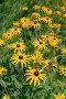 Декоративные цветы, фото № 385190, снято 24 июля 2008 г. (c) Виктор Филиппович Погонцев / Фотобанк Лори