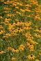 Декоративные цветы, фото № 385214, снято 24 июля 2008 г. (c) Виктор Филиппович Погонцев / Фотобанк Лори