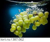 Купить «Свежий виноград в воде на черно-синем фоне с воздушными пузырьками», фото № 387062, снято 15 июля 2008 г. (c) Мельников Дмитрий / Фотобанк Лори