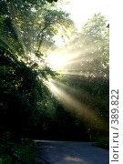 Купить «Раннее утро», фото № 389822, снято 4 июля 2008 г. (c) Сергей  Ушаков / Фотобанк Лори