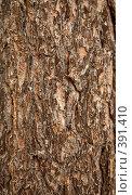 Купить «Поверхность сосновой коры», фото № 391410, снято 10 мая 2008 г. (c) pzAxe / Фотобанк Лори