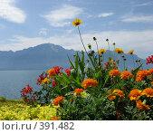 Цветы Швейцарии (2008 год). Стоковое фото, фотограф Светлана Кудрина / Фотобанк Лори