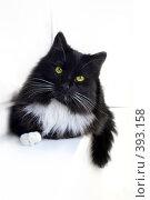 Отдыхающий черно-белый кот на белом фоне B/w cat. Стоковое фото, фотограф Aneta Vaitkiene / Фотобанк Лори
