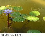 Купить «Цветок на воде», фото № 394378, снято 24 июля 2007 г. (c) Назаренко Ольга / Фотобанк Лори