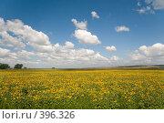 Купить «Летний пейзаж. Кубанские просторы под голубыми небесами», фото № 396326, снято 7 августа 2008 г. (c) Федор Королевский / Фотобанк Лори