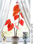 Купить «Растение с красными листьями», фото № 397270, снято 29 апреля 2007 г. (c) Студзинский Станислав Болиславович / Фотобанк Лори