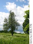 Купить «Одинокое дерево», фото № 403770, снято 18 ноября 2018 г. (c) Сергей  Ушаков / Фотобанк Лори