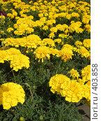 Купить «Фон из цветов», фото № 403858, снято 14 августа 2008 г. (c) Алла Кригер / Фотобанк Лори