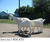 Купить «Коза с козлятами на прогулке», фото № 404470, снято 31 июля 2008 г. (c) Елена Велесова / Фотобанк Лори