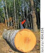 Купить «Топор в березе», фото № 404834, снято 30 июня 2007 г. (c) Ярослава Синицына / Фотобанк Лори