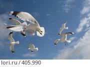 Купить «Чайки в небе», эксклюзивное фото № 405990, снято 30 июля 2008 г. (c) Ирина Терентьева / Фотобанк Лори
