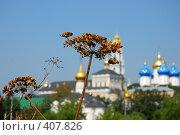Купить «Сухоцвет на фоне Троице-Сергиевой Лавры», фото № 407826, снято 17 августа 2008 г. (c) Ekaterina Chernenkova / Фотобанк Лори
