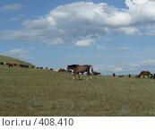 Купить «Степные кони», фото № 408410, снято 23 июля 2008 г. (c) Людмила Жесут / Фотобанк Лори