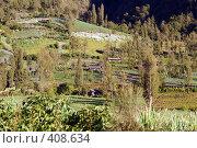 Купить «Поля зеленого лука на склоне горы», фото № 408634, снято 3 июня 2008 г. (c) Валерий Шанин / Фотобанк Лори