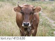 Купить «Однорогая коровка», фото № 413630, снято 30 июля 2008 г. (c) Голофеева Галина / Фотобанк Лори