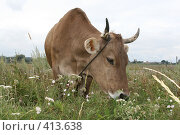 Купить «Корова», фото № 413638, снято 30 июля 2008 г. (c) Голофеева Галина / Фотобанк Лори
