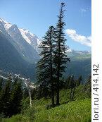 Купить «Деревья на Домбае, вид с канатной дороги», фото № 414142, снято 30 июля 2006 г. (c) Екатерина Слива / Фотобанк Лори