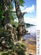 """Купить «Озеро """"Селигер"""" (о. Волго)», фото № 416922, снято 27 июля 2008 г. (c) Александр Секретарев / Фотобанк Лори"""