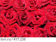 Купить «Фон из красных роз», фото № 417238, снято 11 августа 2008 г. (c) Сергей Старуш / Фотобанк Лори