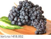 Кисть черного винограда. Стоковое фото, фотограф Марина Субочева / Фотобанк Лори